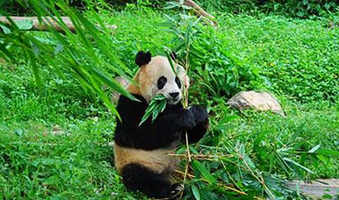 大连去广州长隆欢乐世界,香江野生动物园